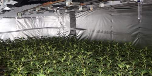 Cannabis factory uncovered in Preston
